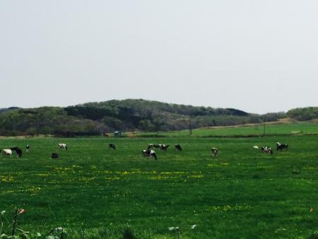 人の3倍、牛のいる街