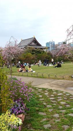 桜の頃の芝生広場
